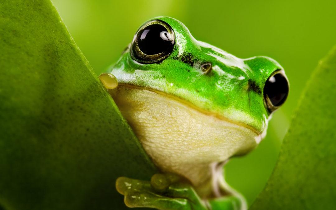 Êtes-vous une grenouille qui ne sait pas qu'elle est en train de cuire?